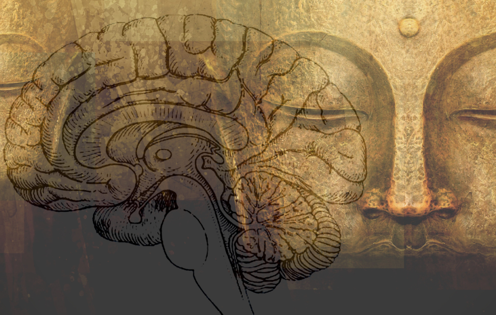 """""""Descobrint el cervell humà: del budisme a la neurociència"""" amb Richard Davidson i Koncha Pinós"""